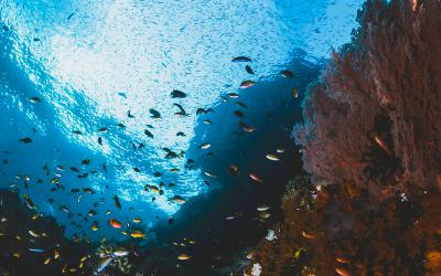 Creatividad empresarial: la estrategia del océano azul